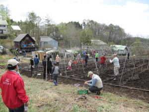 花豆棚作り